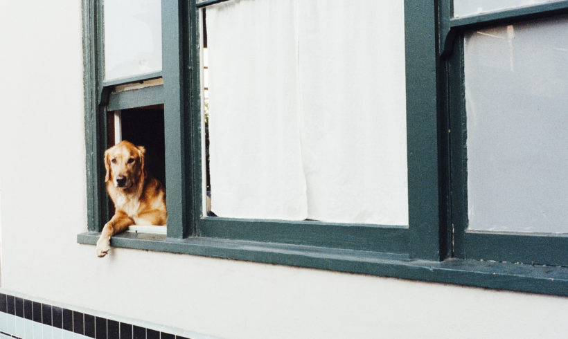 Moving and can't take your pet?